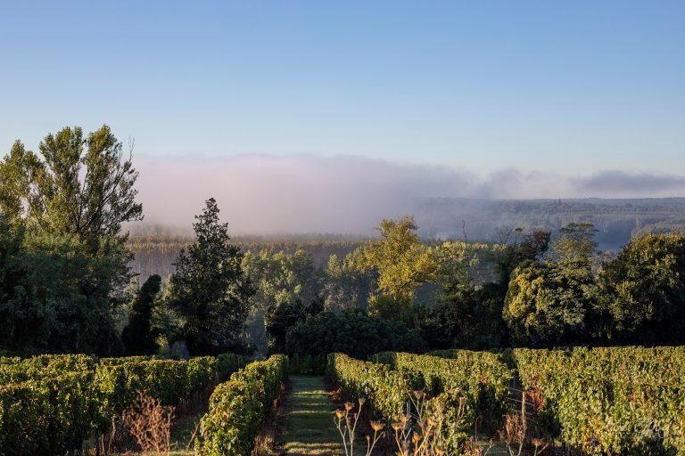 photo de vignes en Gironde