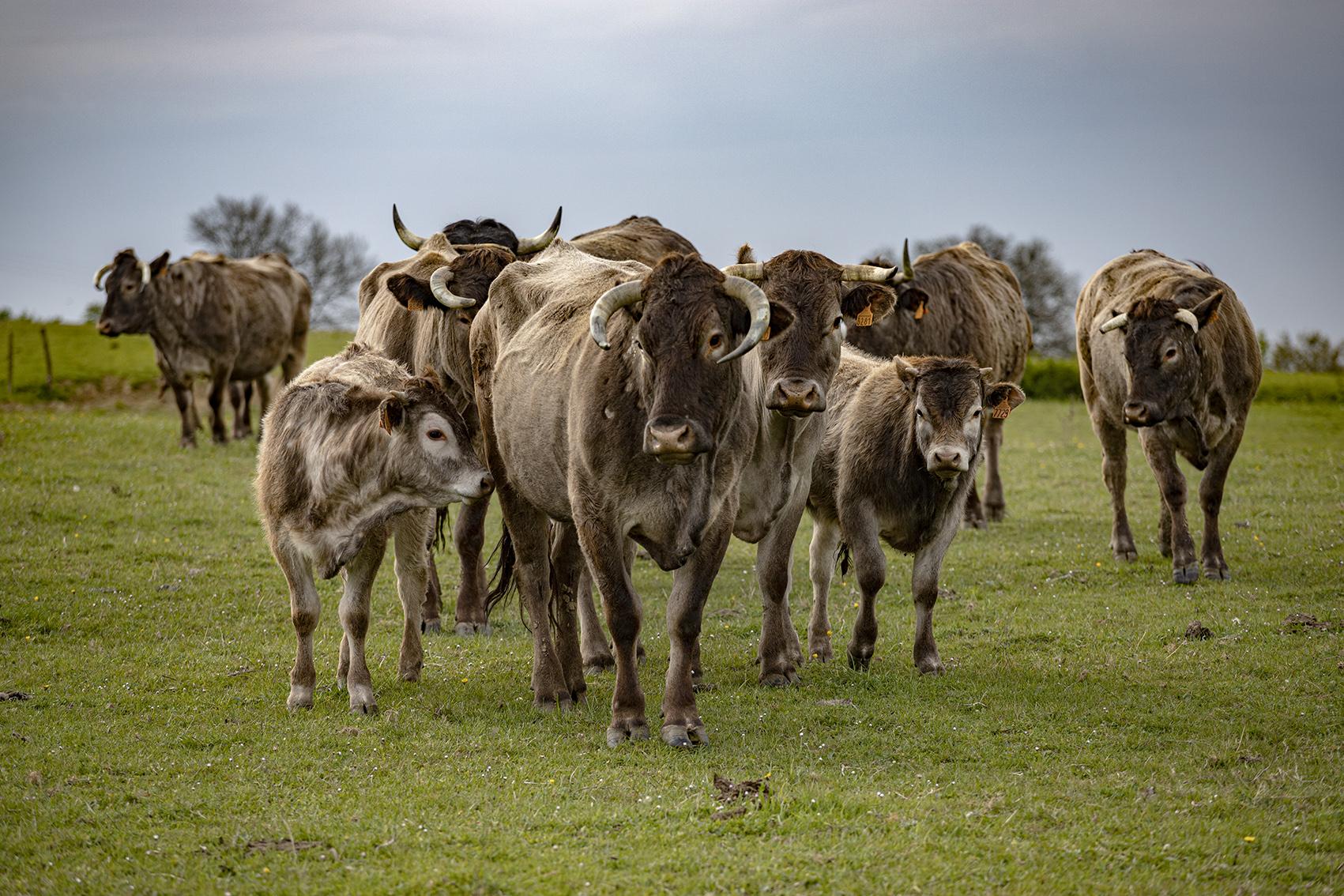 photographe animalier en Gironde et ailleurs